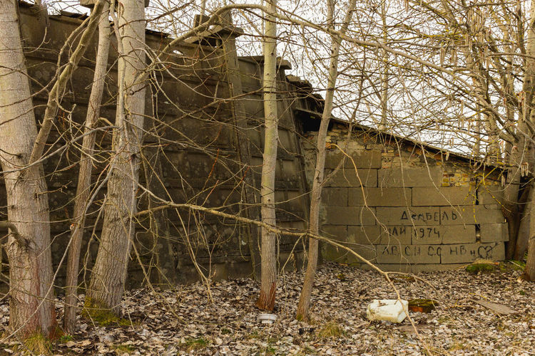 Abandoned building by bare trees
