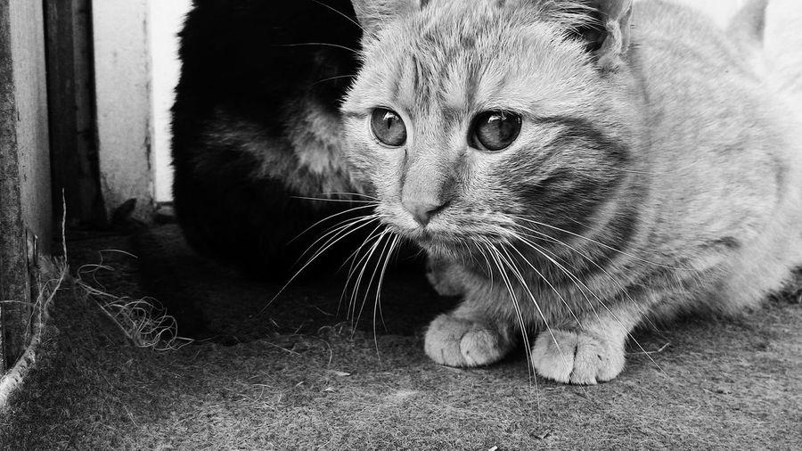 Cats Showcase: February Hunting Mobilephotography Blackandwhite