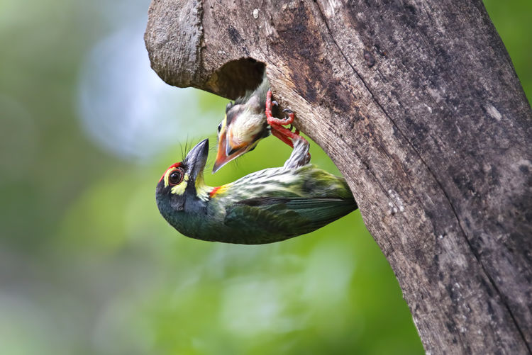 Animals In The Wild Animal Wildlife Animal Animal Themes Vertebrate One Animal Bird Tree Plant Focus On Foreground Trunk Tree Trunk Day No People Nature Woodpecker Close-up Perching Outdoors Branch