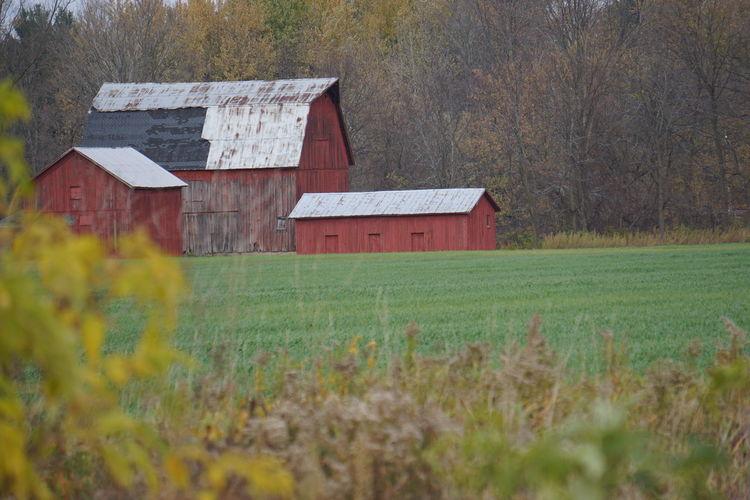 Barn on field against buildings