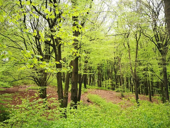 """""""One forest"""" Green Color Growth Nature Day No People Outdoors Grass Field Tree Beauty In Nature Bamboo - Plant Bamboo Grove"""