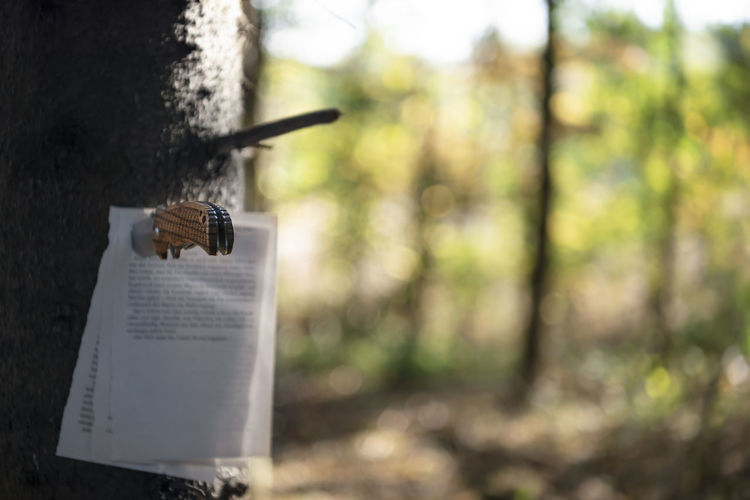 Close-up of knife and papers on tree trunk in forest
