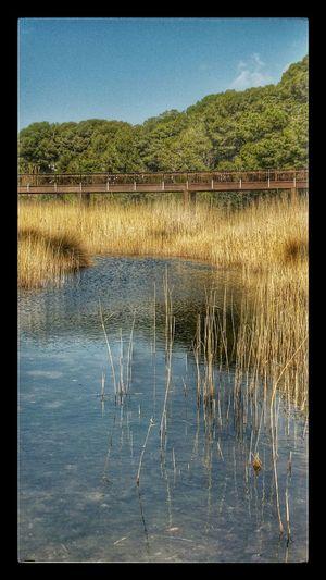 Wetland for birds