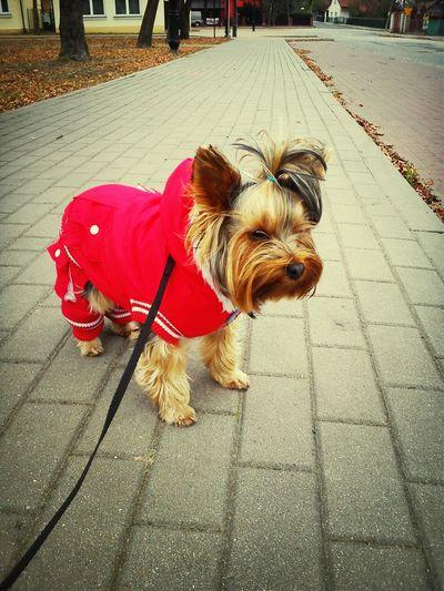 Komuś jest zimno My Doggy