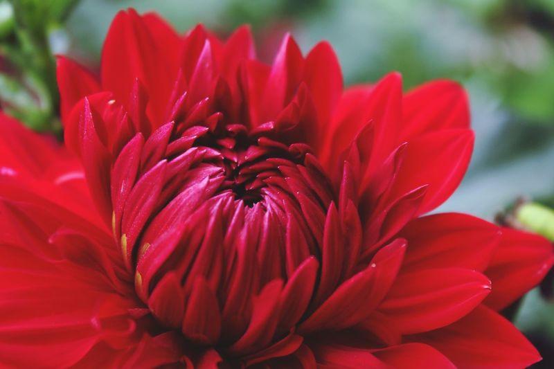 Flowers Zinnia  Nature Urban Gardening EyeEm Nature Lover