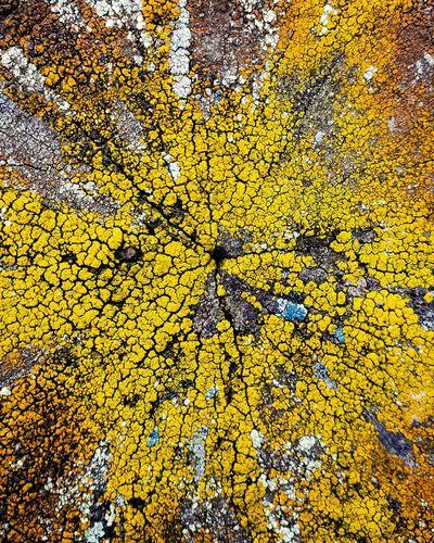 Full frame shot of yellow flowering tree