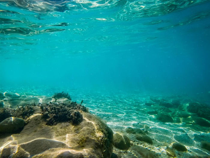 Water Sea Underwater UnderSea Sea Life Animals In The Wild Nature Animal Wildlife Beauty In Nature Animal Themes Animal Blue Turquoise Colored Marine Swimming No People Rock Solid Day Outdoors Purity Ecosystem  Underwater Diving School Of Fish