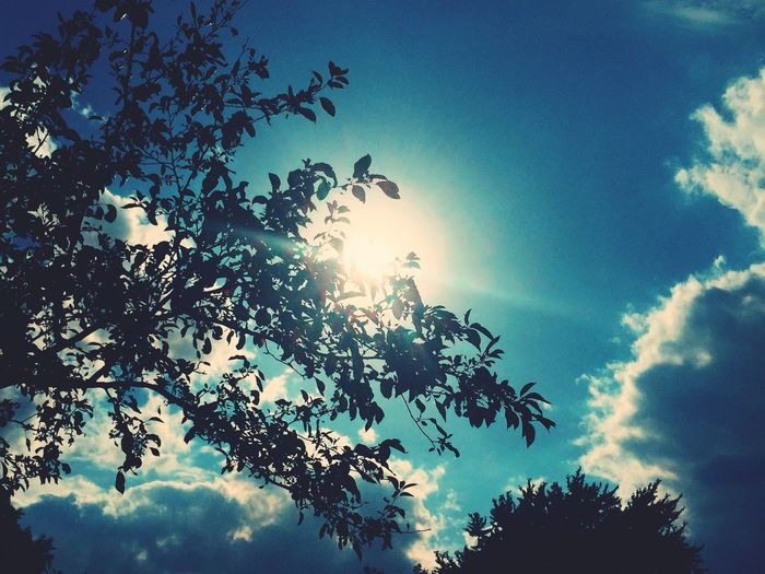Dramatic Sky Dramatic Lighting Dramatic Skies Dramatic Dramatic Light Clouds Photography Photographer VSCO Vscocam Taking Photos Nature Photography Sunshine Summertime Sunthroughclouds Sunthroughtrees Nature_collection Natural Pattern Taking Photos Photos Around You Natural Beauty Leaves Sunshine ☀ Nature On Your Doorstep Sunbeam