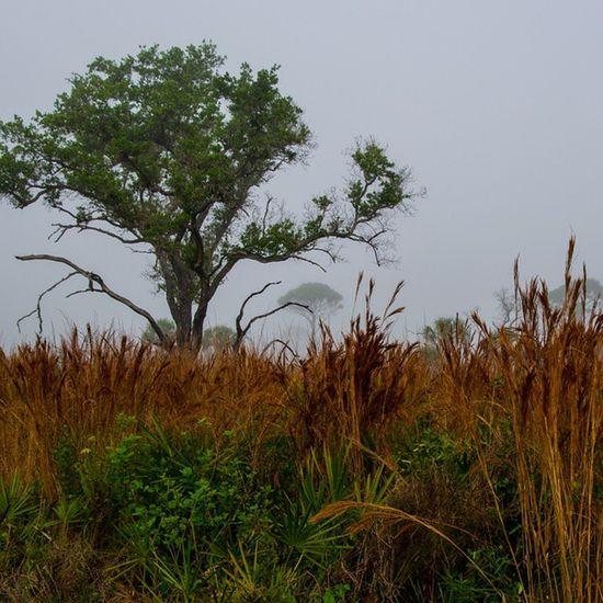 Myakka Marsh Florida Sarasota plantsholiday