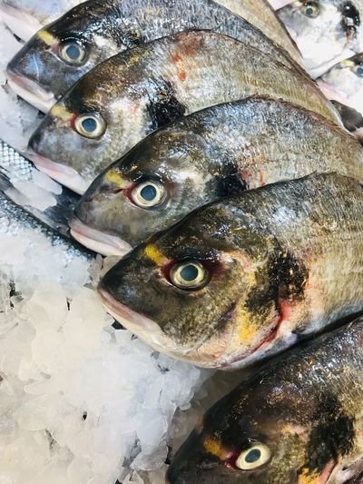 Fish on ice, mobile photo Vertebrate Fish Animal Seafood Close-up No People High Angle View Freshness Cold Temperature Raw Food Healthy Eating Market For Sale Animal Themes Food And Drink Wellbeing Ice Fish Market Food Fishing Industry
