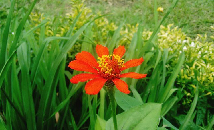 Red flower Red RedFlowers😍 RedFlower Flowers Garden Garden Photography Green