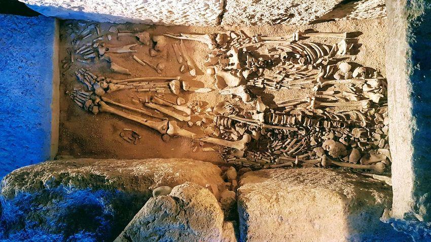 Skeletons Skeleton Human Skeleton Human Hand Archeology Museum