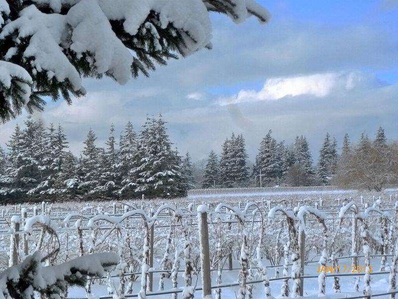 Winter Snow Winter Wonderland #landscape #nature #photography