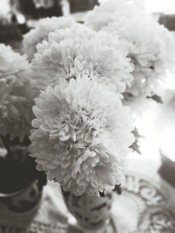 Flowers Nature Morte Still Life Black & White