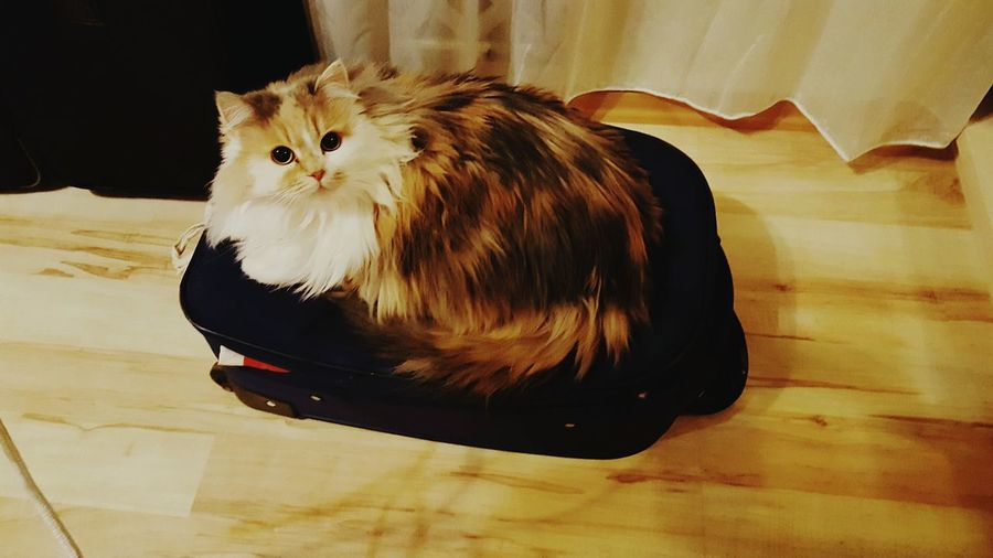 The Cat The Baggage Guardian Cat♡ Cat Lovers Catoftheday Cats Of EyeEm Enjoying Life Hanging Out Springtime Traveling Tranquility Check This Out Beauty In Ordinary Things Beauty Is Everywhere  Relaxing Mood