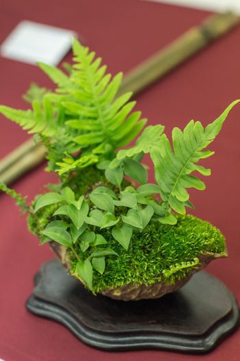 Green Color Leaf Indoors  Plant Part Food Herb Freshness Plant Close-up Potted Plant No People Table Healthy Eating Wellbeing Colored Background Growth Nature High Angle View Leaves Tray Bonsai