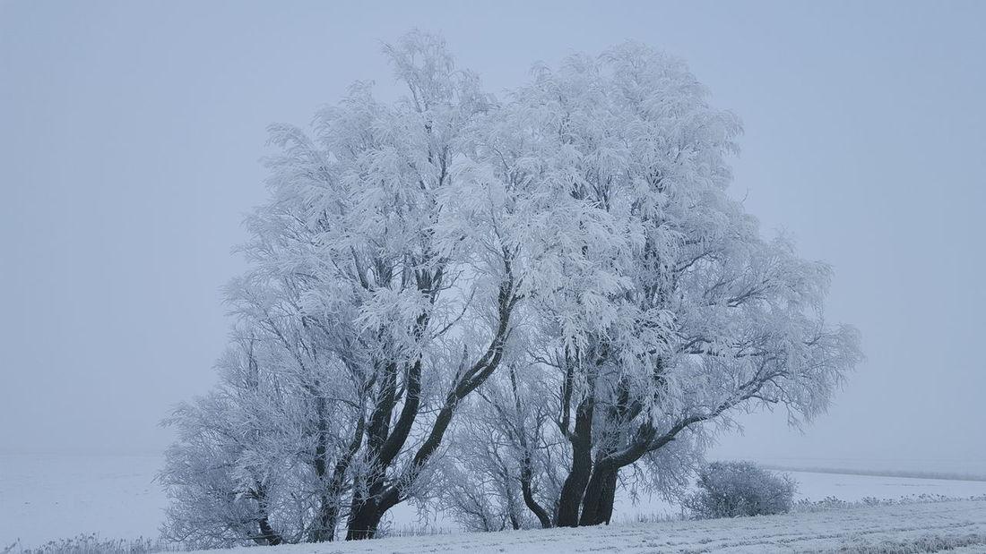 Snow Schneelandschaft Eiderstedt Snow ❄ Frost Winter Wonderland Cold Winter ❄⛄ Schnee Winterwonderland Winter Wintertime Nordfriesland Schleswig-Holstein Frosty