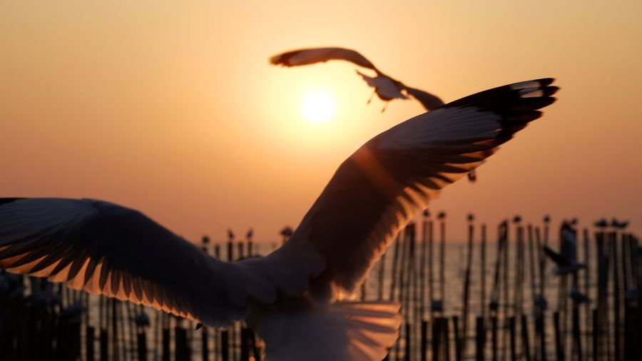 Low angle view of seagulls flying against sky during sunset