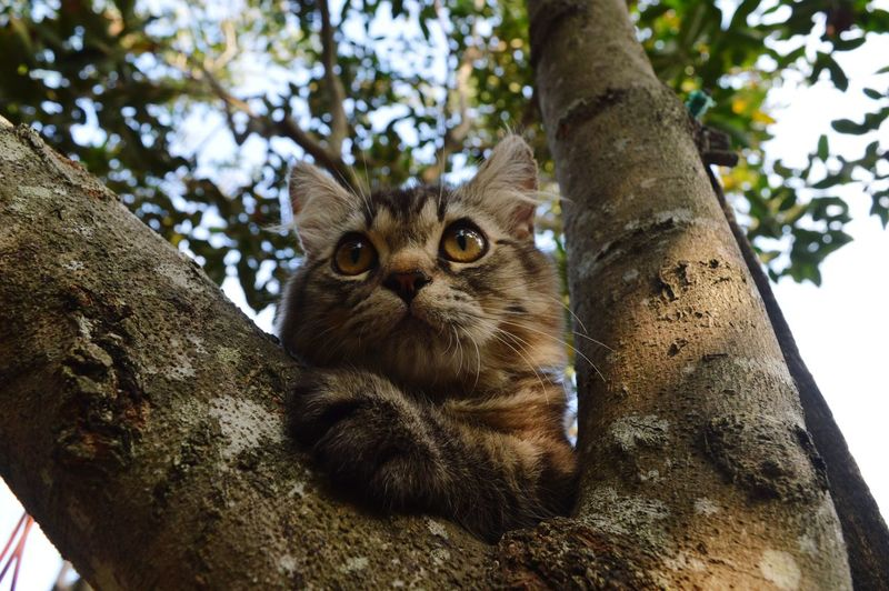 Portrait of cat on tree trunk