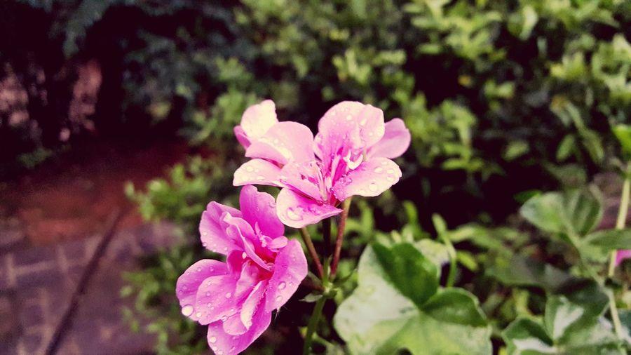 Botany Vibrant
