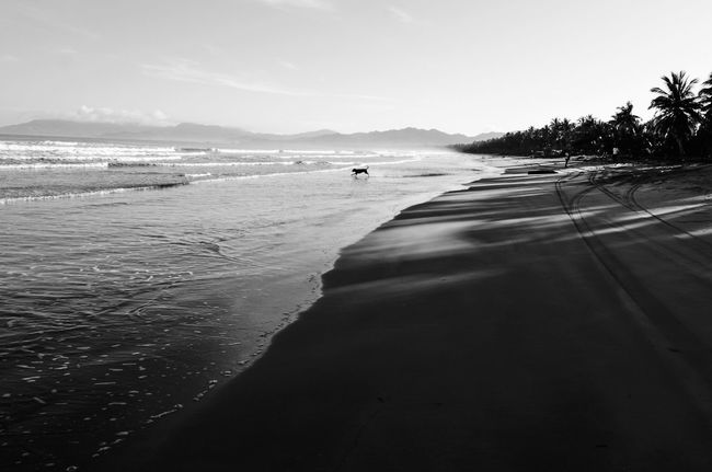 Travel Travel Photography Beach Black And White Black And White Photography Dog Dog In Beach Nature Outdoors Philippine Beaches Pursuit - Concept Pursuit Of Happiness Scenics - Nature Sea Tranquil Scene Tranquility Travel Destinations Water