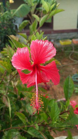 Hibiscus Hello World Nature Photography Flowerporn Flowerpower