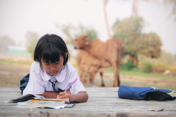 Schoolgirl studying while sitting against cows