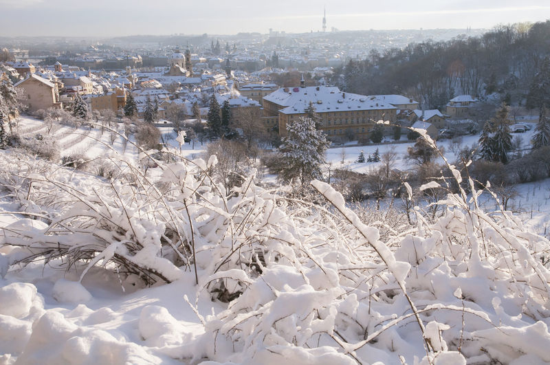 Snow covered trees and buildings in city