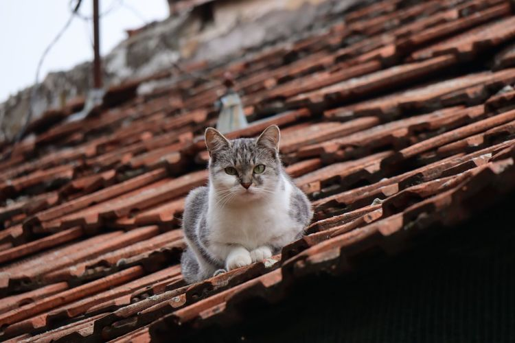 Cat Feline Animal Themes Pets Domestic Cat Mammal Animal Looking Away Built Structure Day Sitting Low Angle View Focus On Foreground Roof One Animal No People Vertebrate Domestic Domestic Animals Looking
