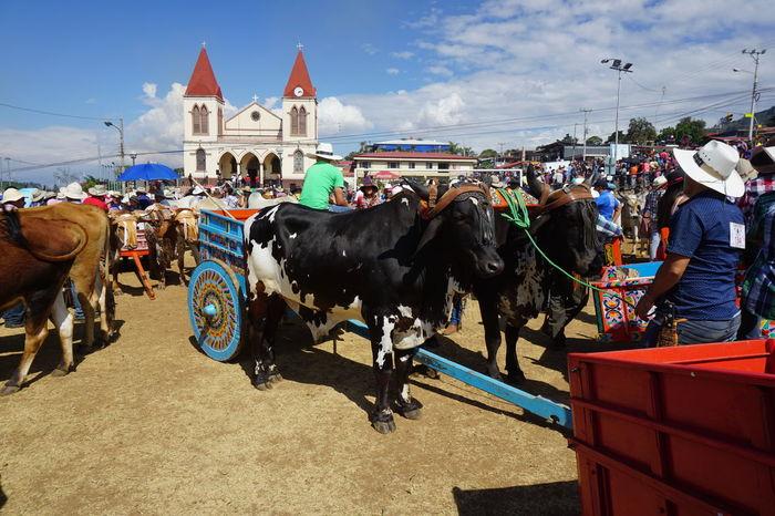 Church Costa Rica Traditional Clothing Farmers Farmers Event Farming Event Ox Cart Ox Cart Drivers Oxes Painted Ox Carts Traditional Traditonal