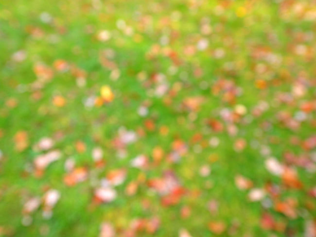 Autumn Backgrounds Beauty In Nature Berlin Close-up Day Defocused Fine Art Photography Flower Forest Fragility Freshness Full Frame Grass Green Color Growth Leaf Leafs Minimalism Multi Colored Nature No People Outdoors Vibrant Color Wolskartin