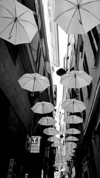 White Umbrella Euroflora 2018 Umbrella Umbrella Revolution Umbrellastreet Umbrellas In The Sky White Umbrella Genoa Genoa, Italy, Europe, Liguria Hanging Beach Umbrella