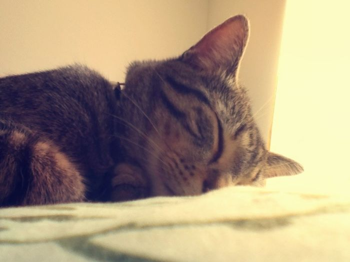 Dreaming of salmon and laser pointers Cats Cute Pets Best Friend Animal Love