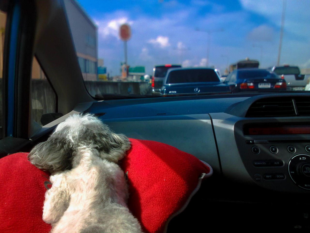 car, transportation, land vehicle, car interior, mode of transport, vehicle interior, one animal, road trip, travel, mammal, day, dog, real people, domestic animals, pets, animal themes, outdoors, sky, city, close-up