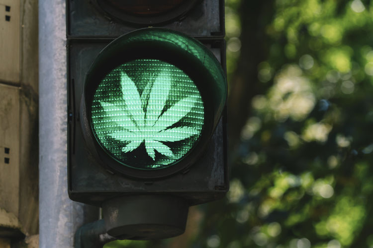 traffic light with hanf leaf sign Cannabis Drugs Green Liberty Road Sign Signal Transportation Close-up Communication Crossing Front View Hemp Illuminated Marijuana Medical No People Outdoors Pedestrian Road Sign Safety Stoplight Symbol Traffic Lights Warning Sign
