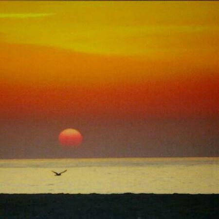 Sea Beach Nature Sunrise Mediterranean  Platges Catalanes Albada