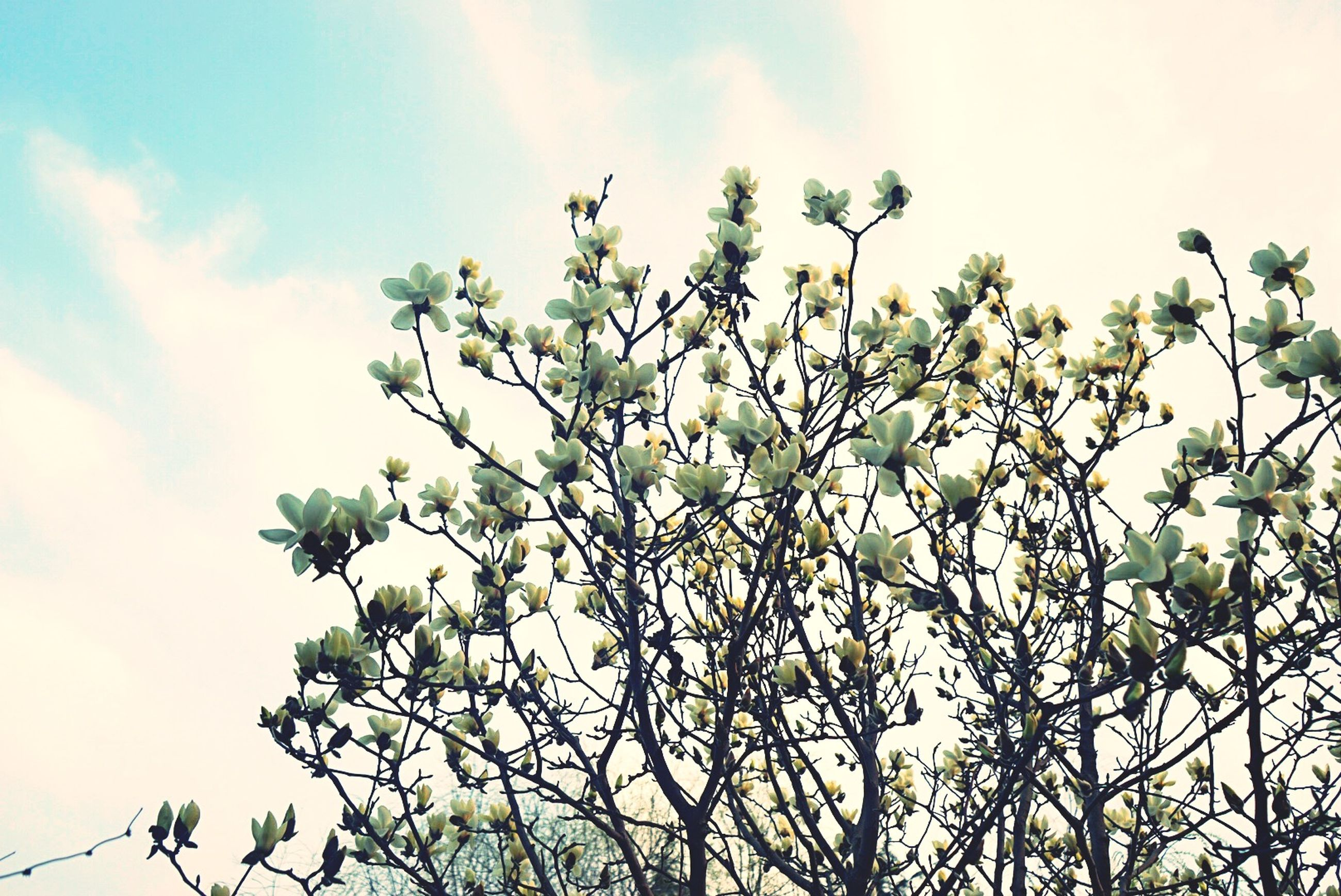 low angle view, growth, sky, flower, nature, freshness, beauty in nature, branch, leaf, tree, plant, fragility, cloud - sky, cloud, day, outdoors, blossom, no people, stem, blooming