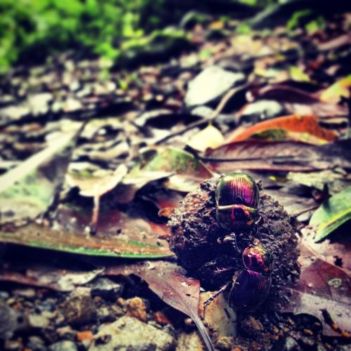 EyeEm Nature Lover Nature_collection Bugs 虫メセン