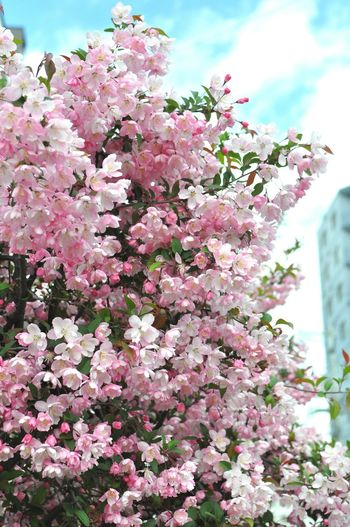 Flowers Pink Pink Flower Tree Life 花 樹 桃色
