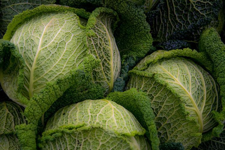 Full frame shot of fresh green leaf