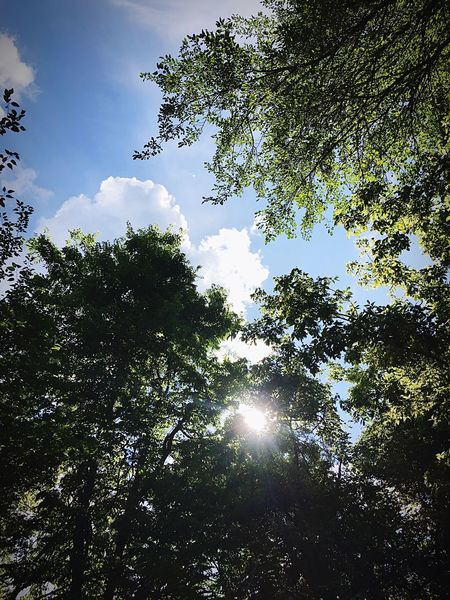 Looking Up Trees And Sky Sun Peaking Through ☀️