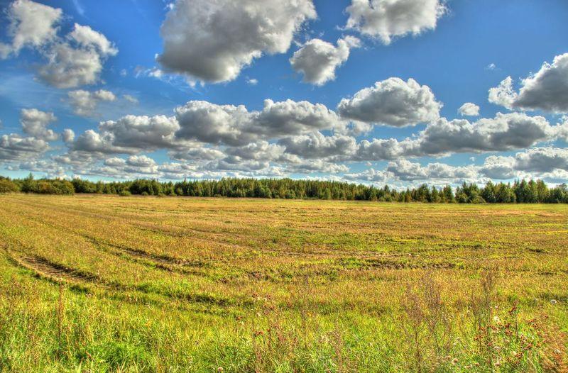 Estonia Field