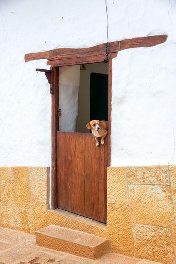 Dog looking through wooden door
