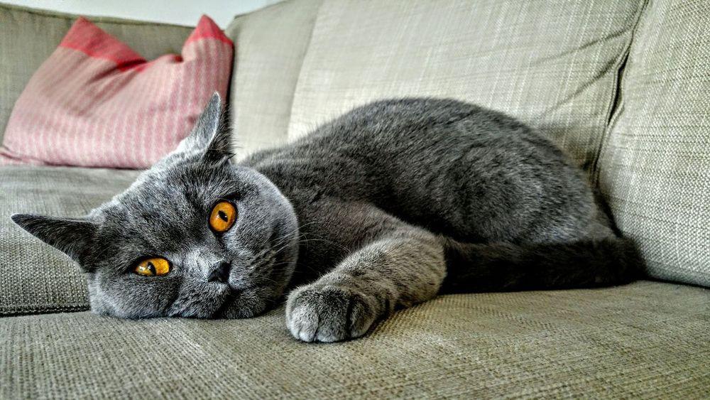 First Eyeem Photo Cat Cats Katzen Katze Haustier Haustiere Pets Pet Grey Grau Eyes Cat Eyes Beautiful Eyes Augen Auge Katzenaugen