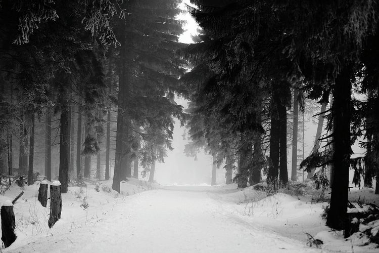 Creepy forest Tree Snow Cold Temperature Winter Nature Landscape Tree Trunk Snowing Outdoors Forest Beauty In Nature FogBlack & White Black And White Blackandwhite Dark Two PeopleNo People Creepy Alone EyeEm Samsungphotography Photography ınstagram Germany