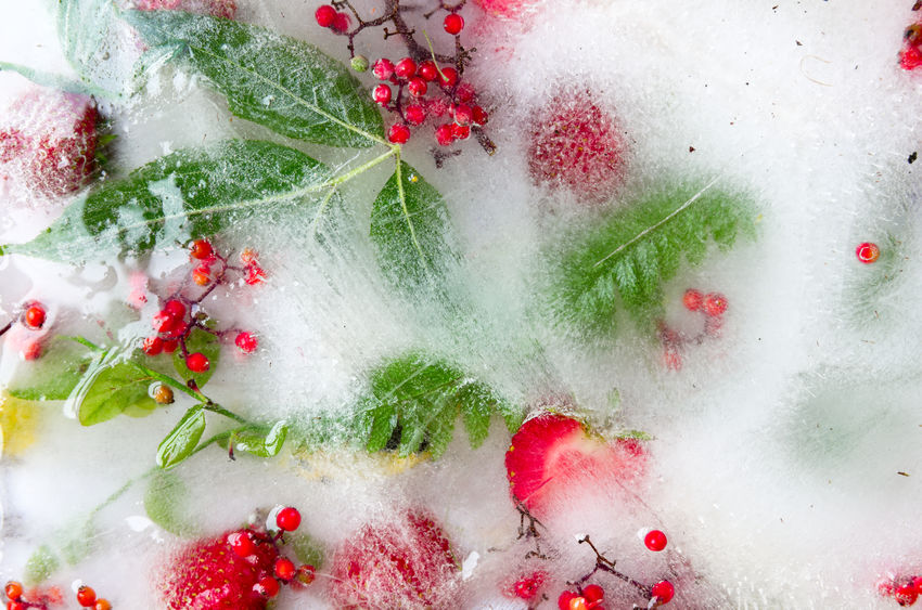 Frozen berries and leaves in ice Frozen Frozenberries Frozenleaves Green Nature No People Red Strawberries Summer
