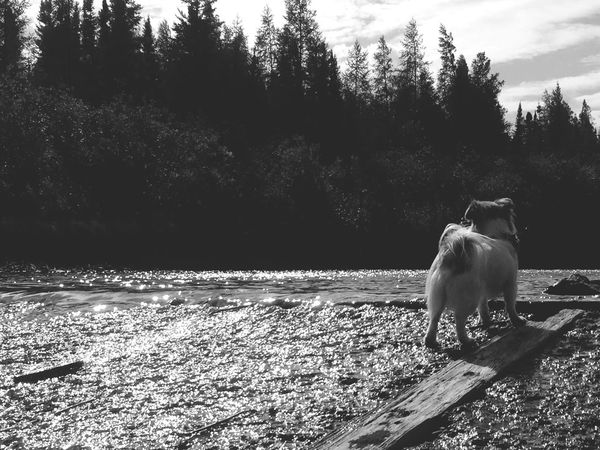 Chewie Dog Pets One Animal Looking Up River Outdoors Trees Nature No People Landscape Sky The Week On EyeEm EyeEmNewHere Pet Portraits Black And White