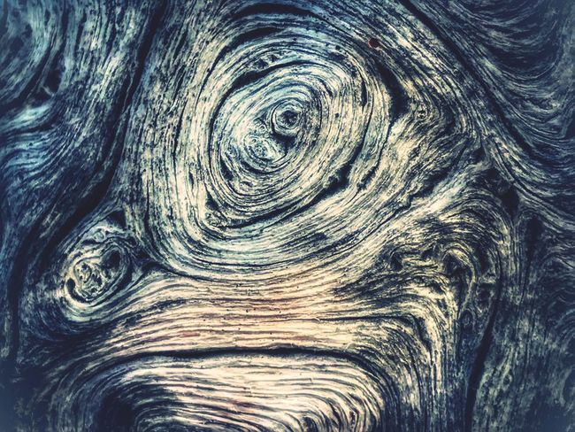 Grumpy Face in the Wood Grain art from a Fallen Tree Full Frame Backgrounds Textured  No People Close-up Nature Knotted Wood