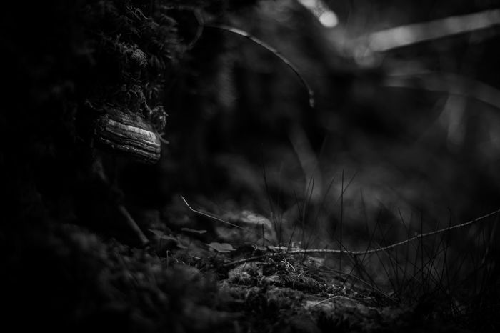 Forest in Dalarna, Sweden Beauty In Nature Black And White Botany Close-up Dalarna Dalecarlia Dull Forest Growth Moss Nature Noir Non-urban Scene Northern Europe Outdoors Plant Scandinavia Selective Focus Summer Sweden Tranquil Scene Tranquility Tree Trunk Wilderness WoodLand