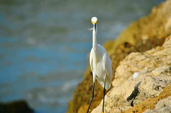 Colombia Nature Bird Photography